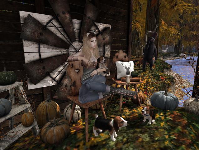 Pumpkins & Puppies.