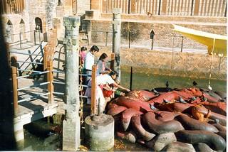 198803.115.06.nepal.kathmandu.maya