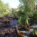 04 Viajefilos en Australia, Litchfield NP 024