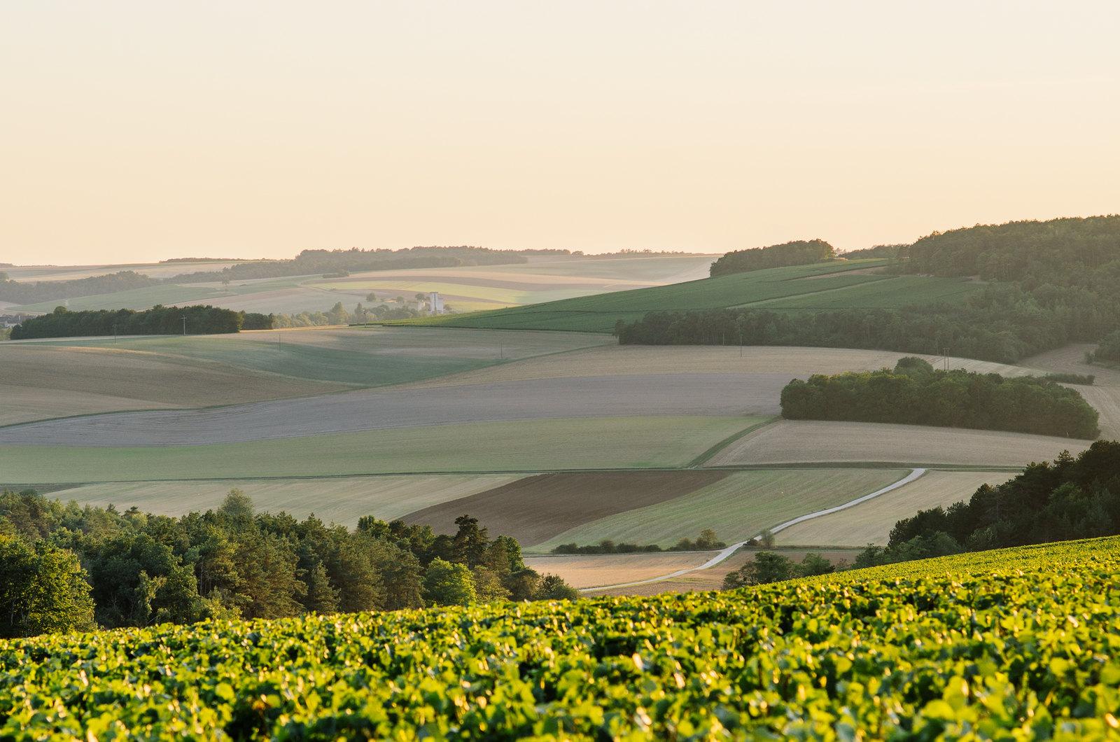 À l'abbaye de Clairvaux, tourisme carcéral - COucher de soleil sur les vignes