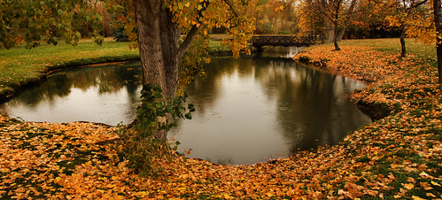 bridge trees lake fall rain pond fallcolors scenic treetrunk arbyreed