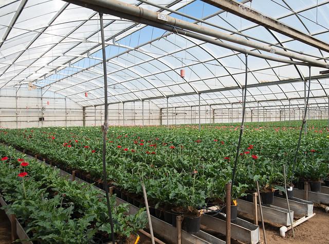 A hydroponic greenhouse