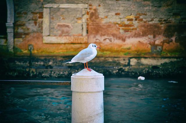 Italien Venedig DSC_1036A