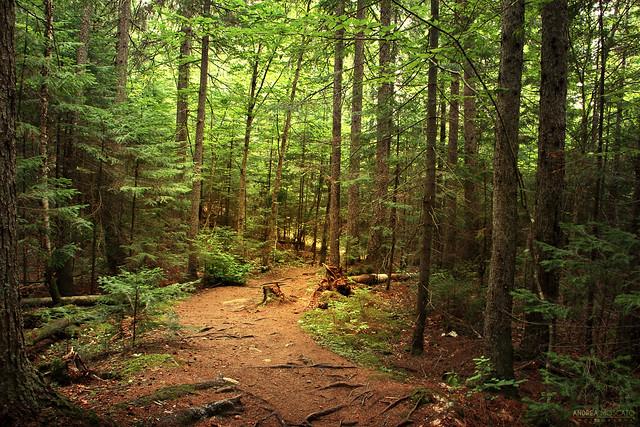 Laurentian Forest - La Mauricie National Park (Québec, Canada)