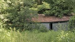 Abandoned woodlot shed - Scotsdale Farm Heritage Property, Halton Hills, Ontario.