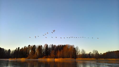 winter sunset sun lake bird ice espoo finland landscape sundown hanhi smartphone microsoft wp talvi xl 950 lintu järvi jää auringonlasku aurinko uusimaa lumia pitkäjärvi pureview lumia950xl