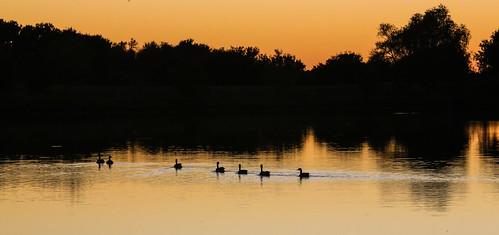 texas wallercounty fieldstore road trees lake water sunset silhouttes reflection wyojones np