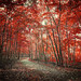 Final Days of Autumn by Anthonypresley1