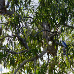 02 Viajefilos en Australia, Kakadu NP 067