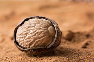 Nutmeg | by ModernDayGilligan