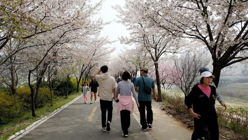 Nguyen, Anna; South Korea - Episode 12 (13)