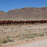 St, 03/28/2012 - 11:32 - Afrika 2012