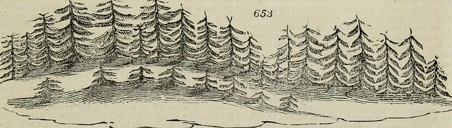 "Image from page 972 of ""An encyclopædia of gardening; comprising the theory and practice of horticulture, floriculture, arboriculture, and landscape-gardening, including all the latest improvements; a general history of gardening in all countries; and a s"