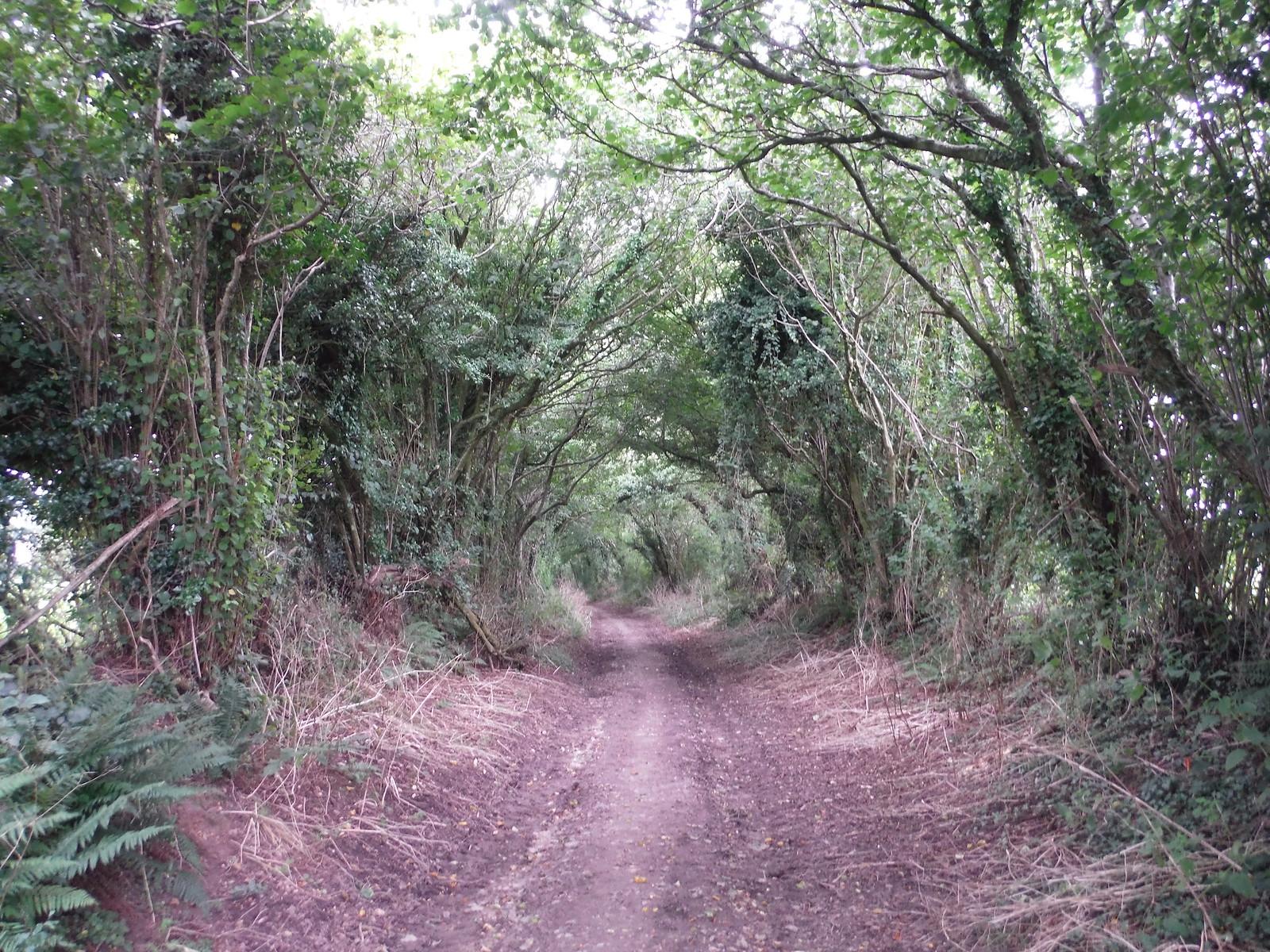 Wessex Ridgeway near Milkwell SWC Walk 251 Tisbury Circular via Ludwell and Berwick St. John