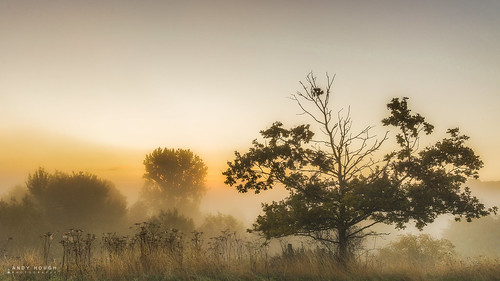 morning trees england mist tree misty sunrise golden unitedkingdom sony gb goldenhour churchmeadow southoxfordshire littlewittenham a99 sonyalpha andyhough slta99v andyhoughphotography