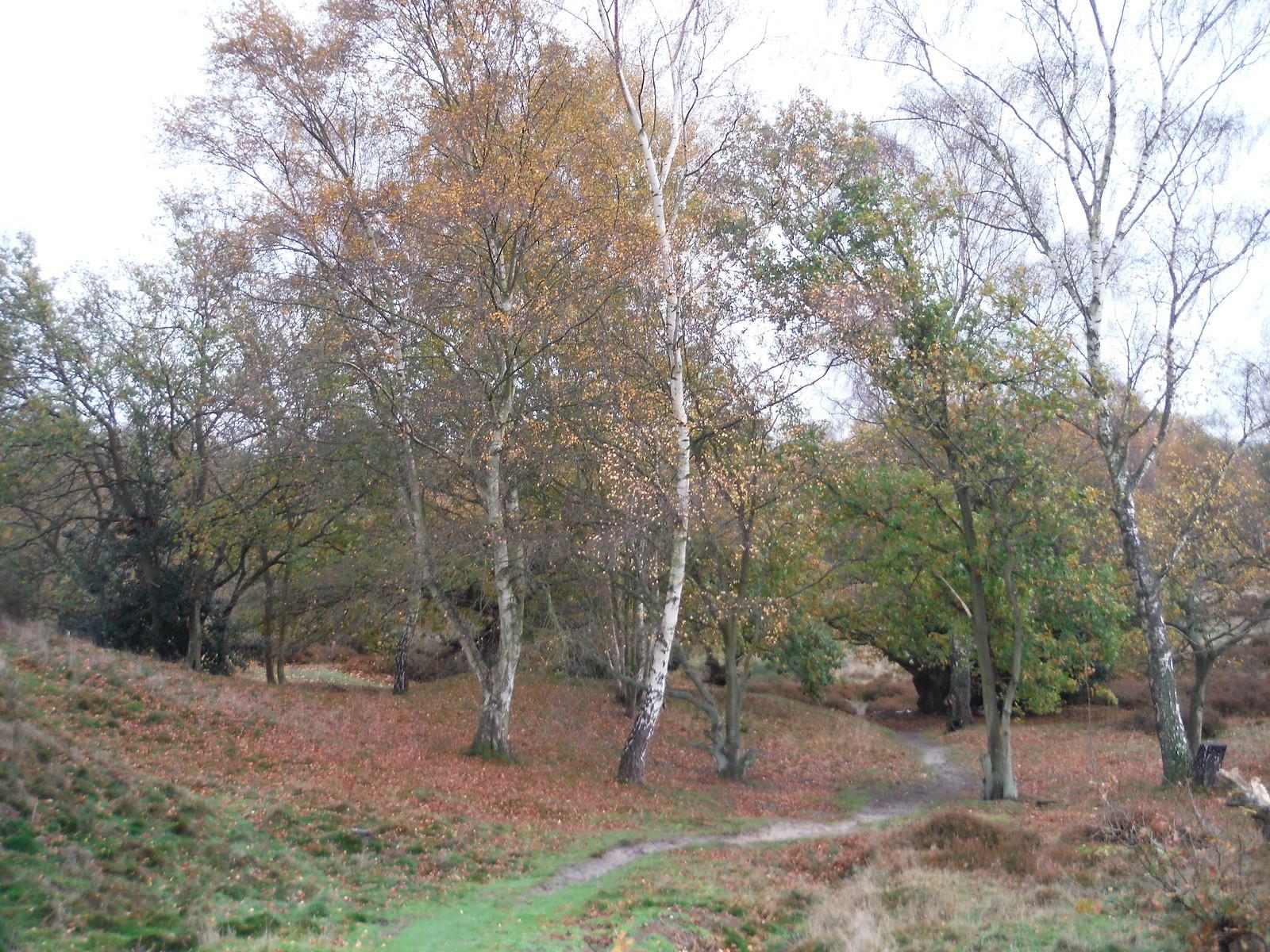 Cooper's Hill Nature Reserve (III) SWC Walk 232 Lidlington to Flitwick