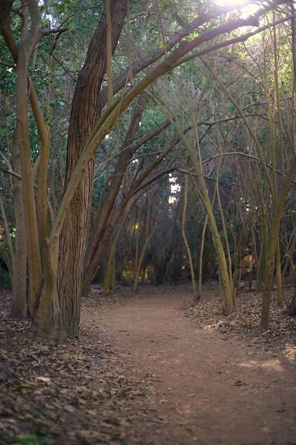 Mid Morning Path