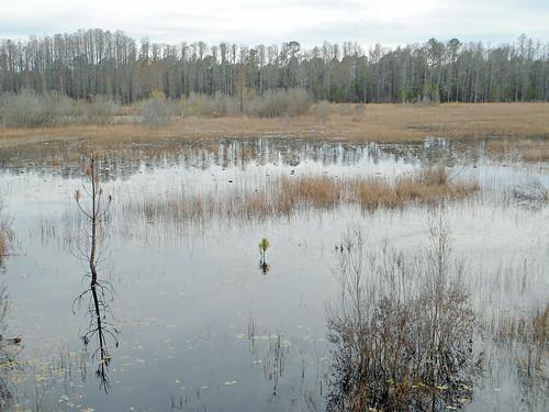 pond lake water aquaticvegetation woods trees brush winter twomileprairie florida