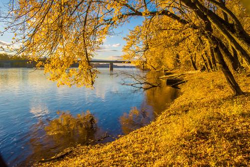 fall autumn yellow golden river connecticutriver windsorlockscanalstatepark windsorlocks statepark connecticut morning dawn newengland leaves landscape nature natural outdoors outside