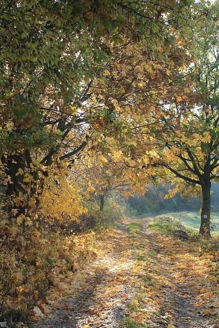 Tolkmicko, Warmia Poland