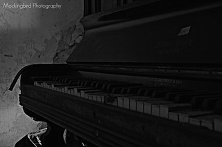 13   by Mockingbird Photographic