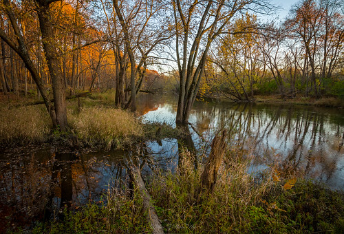 autumn2016 colors desplainesriver fallcolors lakecountyforestpreserve lateautumn ryersonwoods water woods