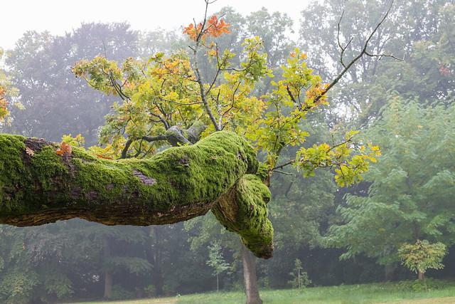 Draken Tak -  Dragon Branch