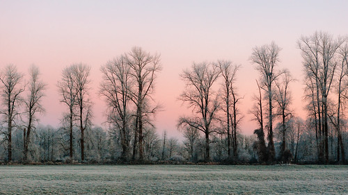 morning trees frost carnation nature landscape cold pacificnorthwest canoneos5dmarkiii canonef2470mmf28lusm johnwestrock washington