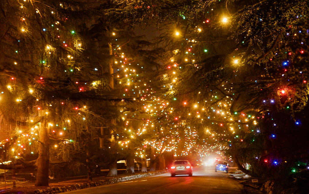 Christmas Tree Lane.Deodar Christmas Tree Lane Each Year Over 140 Deodar Trees