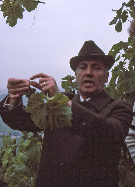 Vine Master Moselle Vineyards
