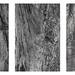 The Earth Triptych: Rock, Tree, Man by Qingshan Wang