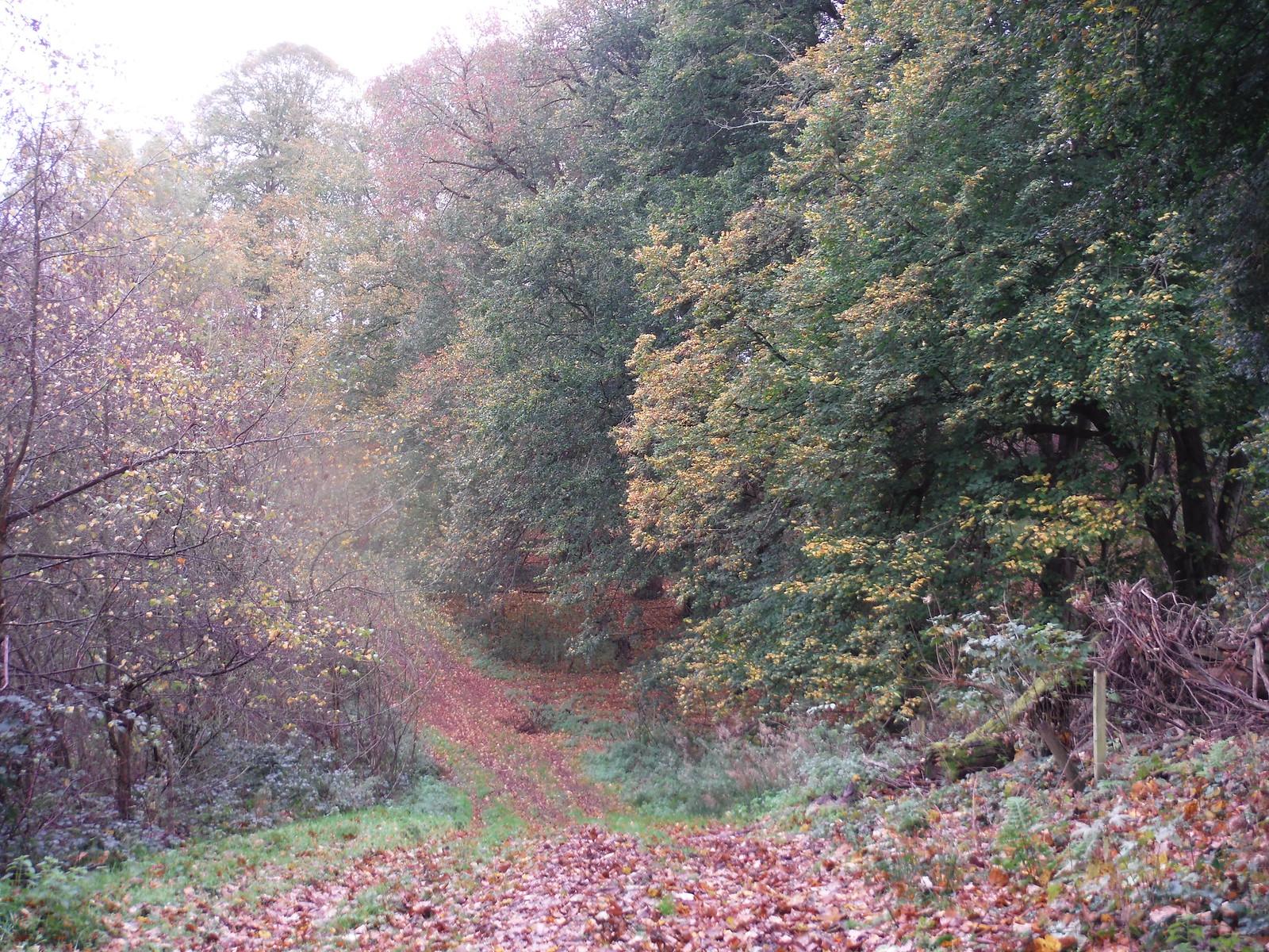 Undulating Route up to the Greensand Ridge (II) SWC Walk 232 Lidlington to Flitwick