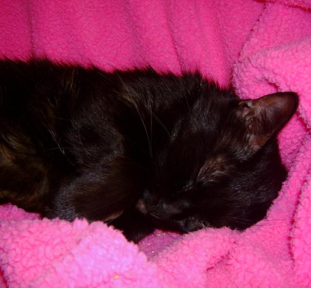 Roweena napping