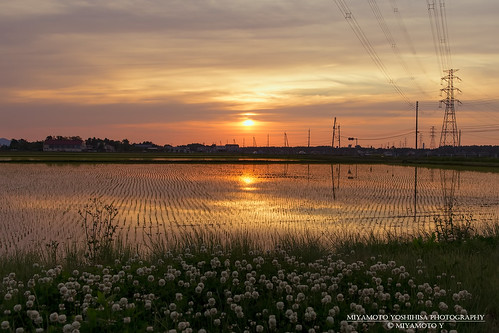 sunset japan spring niigata ricefield joetsu 夕焼け 2015 田園 新潟県 上越市