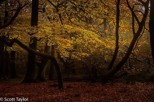 woodland formatthitechcircularpolariser gitzotripod formatthitech woods burnhambeeches canonef24105mmf4lisusm canon landscape photoshopcc canon5dsr buckinghamshire chilterns