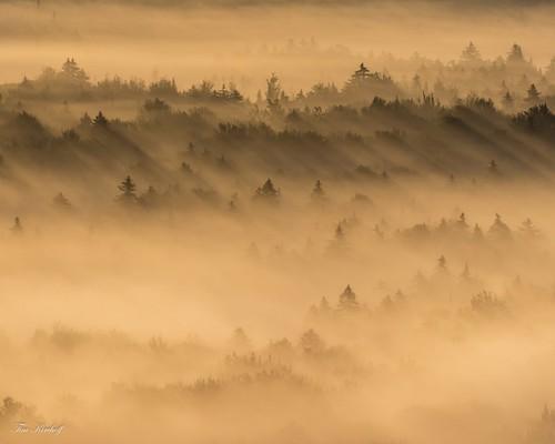 Fog and Shadows | by Tim_NEK