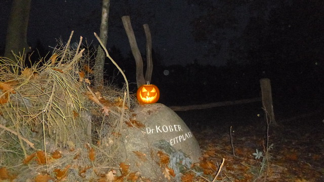 Night Pumpkin 🎃