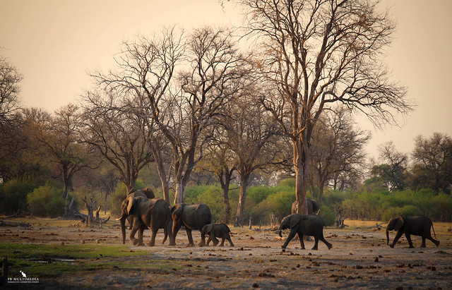 Elephant Family Walking to the River
