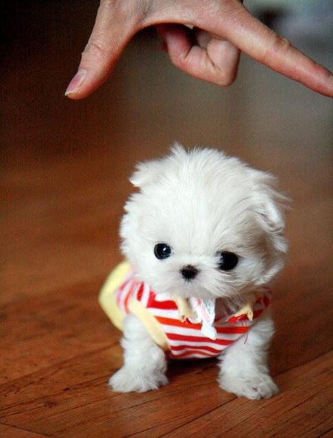 Cute Small Fluffy Dogs Via Pets Gallery Blog Ift Tt 1erhpc Flickr