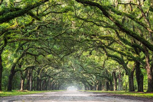 southeast us vacation wormsloe estate savannah liveoaks driveway long light lightattheendofthetunnel beauty