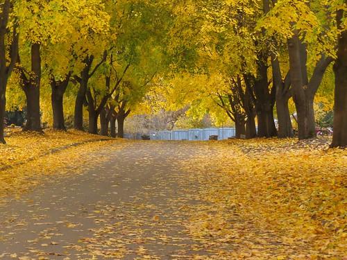 autumn canada cemetery landscape maple scenery britishcolumbia fallcolors mostviewed okanaganbc