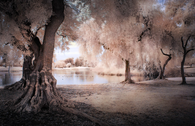 Legg Lake View - Textured IR