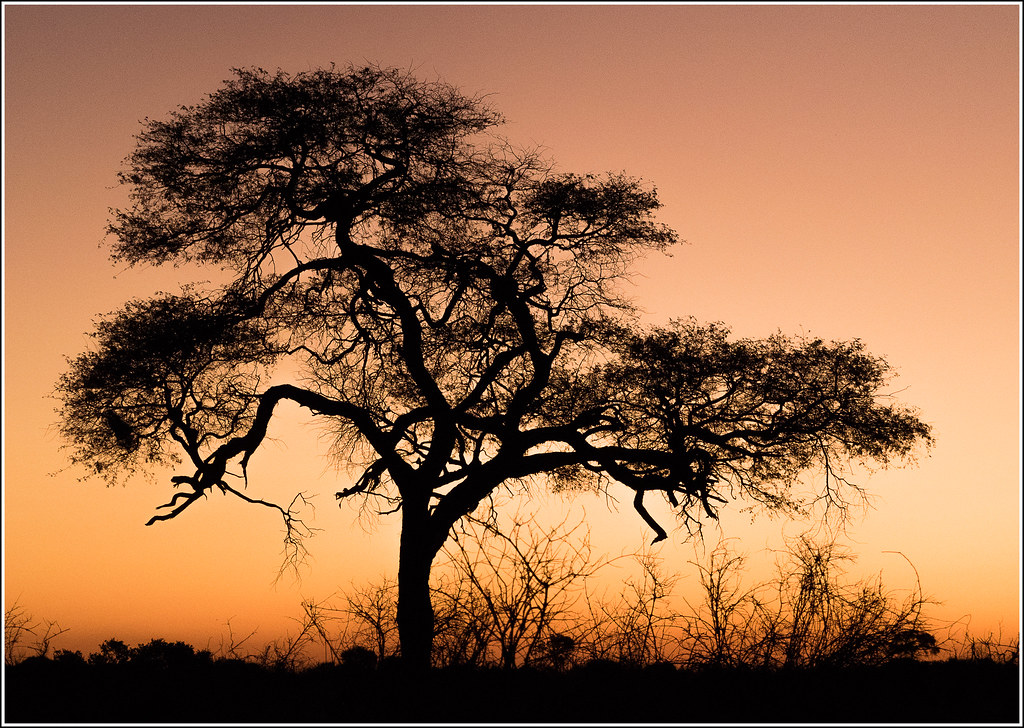 African Afterglow