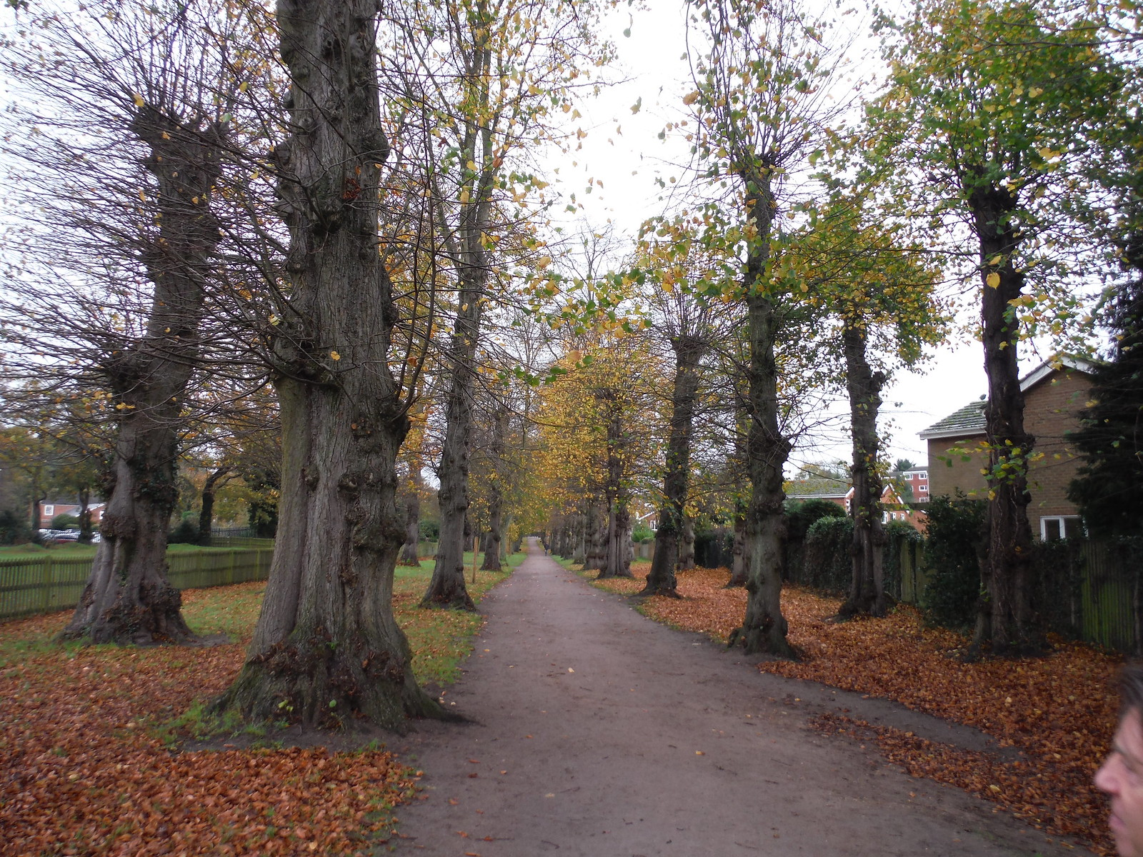 Tree-lined Avenue, Ampthill (II) SWC Walk 232 Lidlington to Flitwick