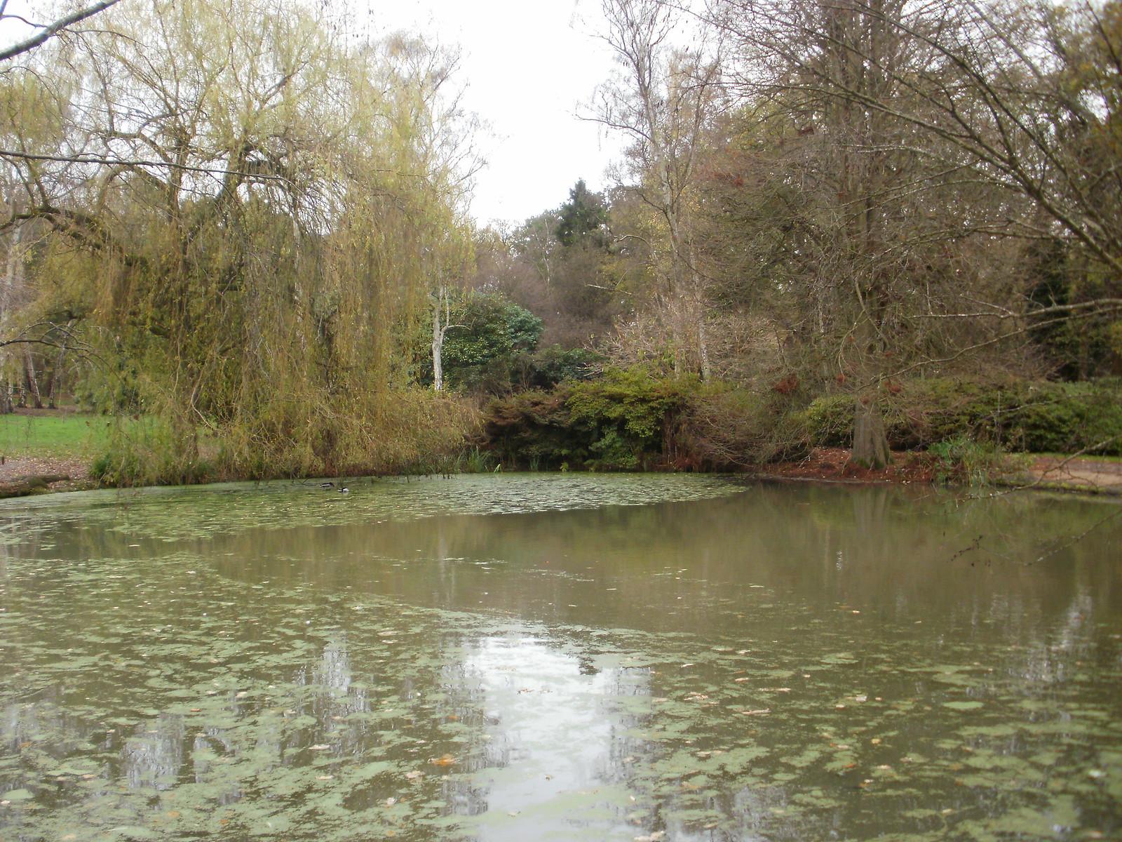 Still Pond Richmond Park 2 OLYMPUS DIGITAL CAMERA