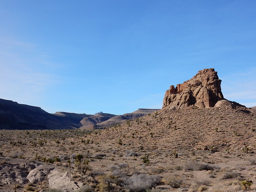Mojave National Preserve - Rings Loop Trail - 3