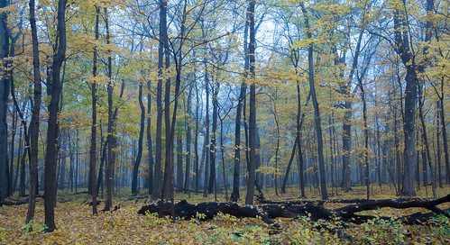autumn2016 cookcountyforestpreserve fog morning potawatomiwoods