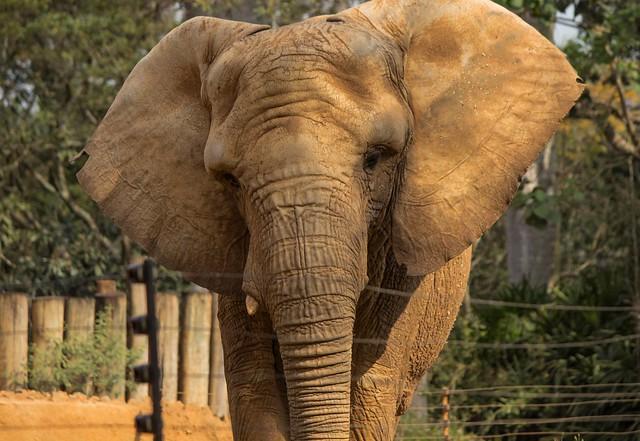 Zoo animals (series 9/9)