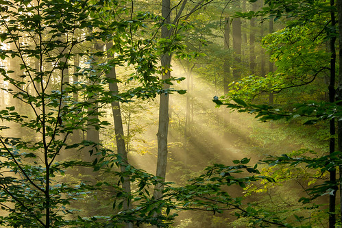 morning trees light green sunshine yellow forest sunrise october bright outdoor michigan ottawa jesus sigma beam serene rays beams jesusrays westmichigan 2015 beammeupscotty ottawacounty canon60d kevinpovenz ottawacountyparks grandravinesnorth