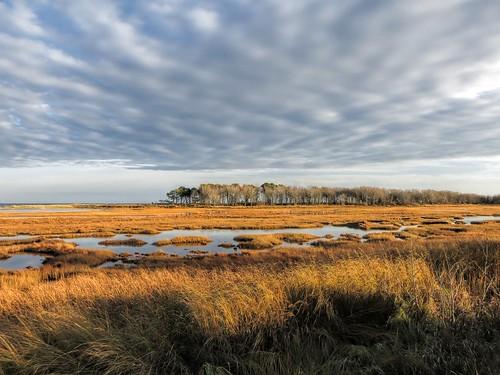 november fall maine wells atlanticocean saltmarsh gulfofmaine ecosystems wellsbeach coastofmaine laudholmfarm coastalecology wellsnationalestuarineresearchreserve